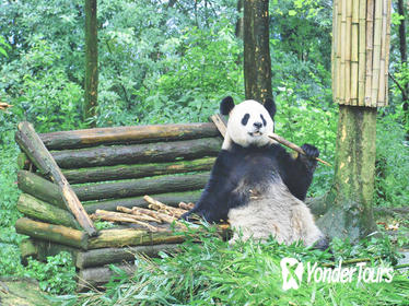 1 Day Chengdu Downtown Tour