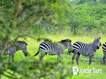 1 Day Lake Mburo Tour from Kampala