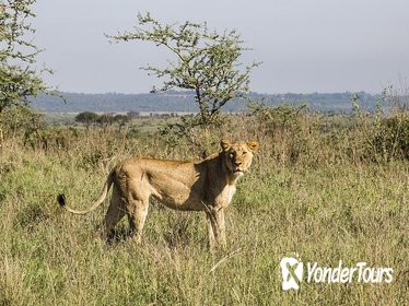 1 Day Nairobi Tour with Park, Elephant Orphanage Giraffe Center& Bomas of Kenya Tour