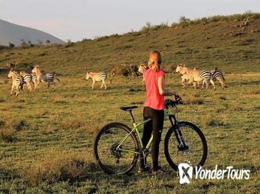 1 day Walking and Bike Safari in Arusha National Park