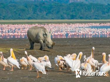 1 Night 2 Days Lake Naivasha,Hells Gate, Lake Nakuru Tour From Nairobi