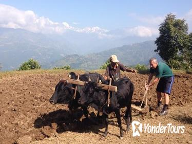 14 days Farmer Community Tour in Nepal