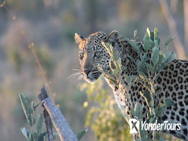 1night 2days Express Kruger National Park Safaris