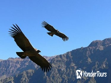 2 days Colca Canyon tour from Arequipa