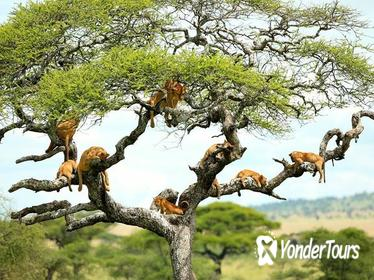 2 Days Short Safaris- - Lake Manyara Or Tarangire and Ngorongoro Crater