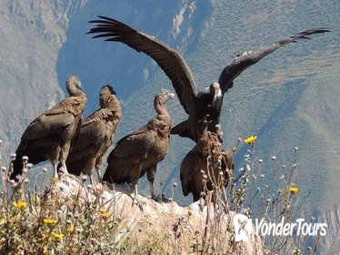 2-Day Colca Canyon and Condor Tour from Arequipa, Peru - Group Service