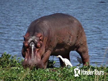 2-Day Murchison Falls National Park Rhino Sanctuary Safari