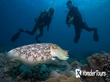 2-Day PADI Advanced Open Water Dive Course in Padangbai