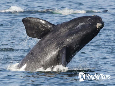 2-Day Whale Watching and Wine Tasting Tour from Cape Town