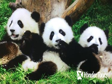 2-Day Xian Terracotta Army and Chengdu Pandas Private Tour