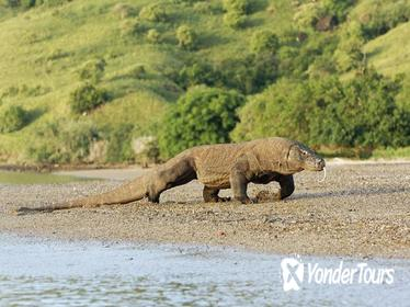 2-Days Visit Komodo Dragon: A Wild Life Adventure from Bali Over Night at Hotel