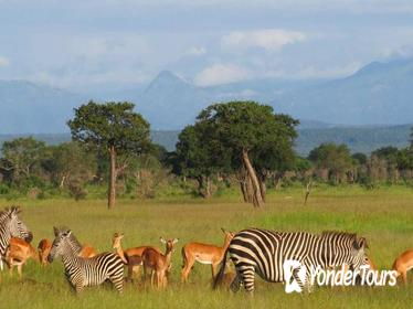 2-Night Mikumi National Park Safari from Dar es Salaam