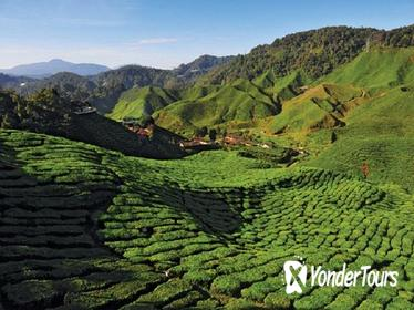 2-Nights Cameron Highlands Discovery from Penang to Kuala Lumpur