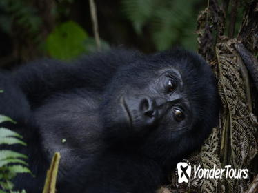 3 day Gorilla Tracking Tour to Bwindi National Park