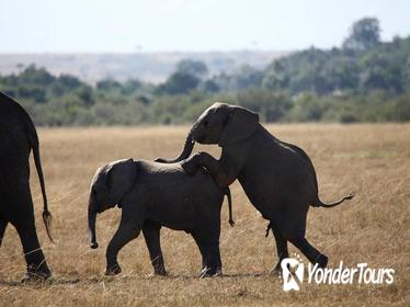 3-Day Amboseli National Reserve Safari from Nairobi