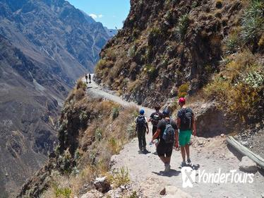 3-Day Backpacker Colca Canyon Trek from Arequipa
