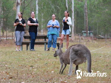 3-Day Great Camping Adventures Kangaroos Abseiling Hiking Aboriginal Experience