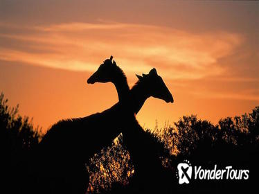 3-Day Kruger Experience Tour from Johannesburg