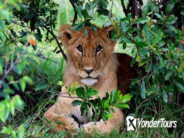 3-Day Masai Mara and Lake Naivasha Private Safari from Nairobi