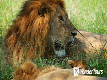 3-Day Masai Mara Guided Safari from Nairobi
