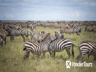 3-Day Serengeti Safari from Arusha