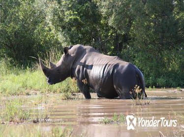 3-Day Tented Kruger Park Safari from Johannesburg
