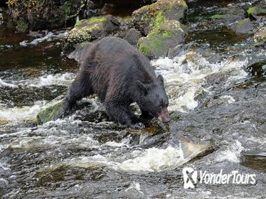 3-Hour Alaska Rainforest Hiking Tour in Tongass National Forest from Ketchikan