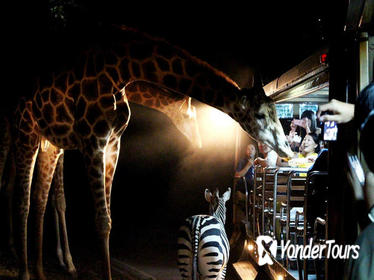 3-Hour Chiang Mai Night Safari