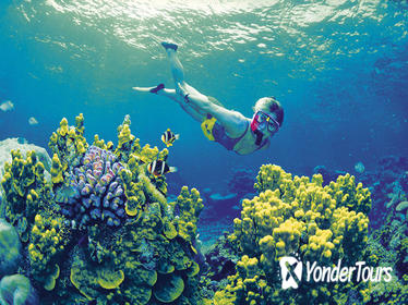 4-Day Cairns and Great Barrier Reef Tour