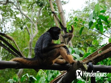 4-Day Iquitos Amazon Jungle Adventure at Heliconia Lodge