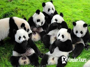 4-Night Soul of Xi'an and Chengdu Tour by Air Including Panda Visit
