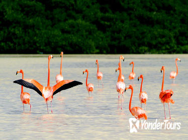 5 Days of Flamingos, Henequen and Mayan Culture