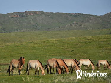 5 Nights Central Mongolia Highlight Tour