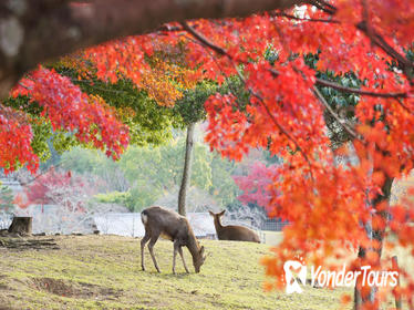 8-Hour Private Tour to Nara and Kyoto from Osaka