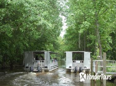 90-Minute Jean Lafitte Swamp and Bayou Tour