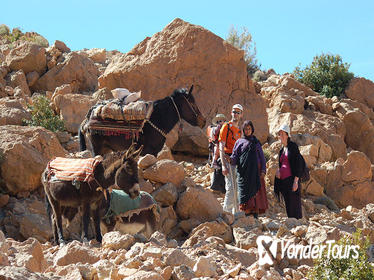 A Walking Day in the High Atlas Among Nomads