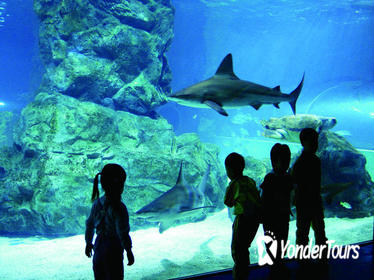 Afternoon Coex Aquarium, Han River Cruise Tour