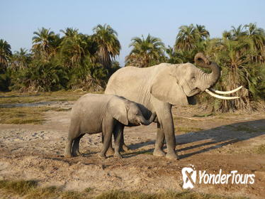 Amboseli national park day tour from Nairobi