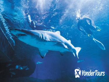 AQWA: 2-Hour Snorkel with Sharks Experience