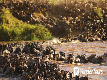 Backpackers Safari: 5-Day Guided Tour from Arusha