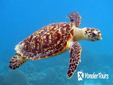 Barbados Turtle Swim and Shipwreck Tour