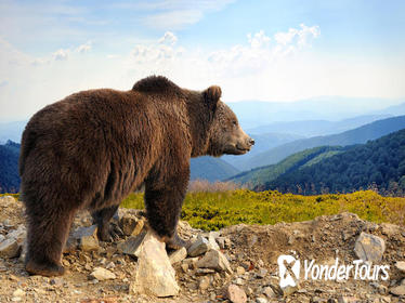 Bear Sanctuary, Bran Castle, and Brasov Medieval Town with a Professional Licensed Guide - Day Trip