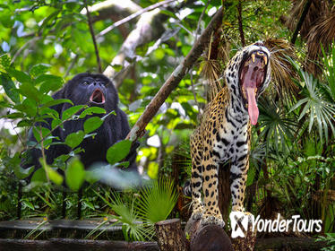 Belize Zoo and Baboon Sanctuary Tour from Belize City