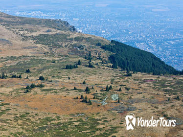 Birdwatching in Vitosha Nature Park from Sofia