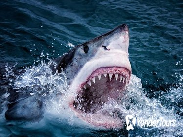 Cape Town 3-Day Attraction Shark Cage Diving , Wine Tasting, Cape Peninsula