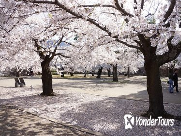 Cherry Blossom and Snow Monkey Day Trip from Nagano