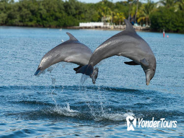 Clearwater Beach Day Trip from Orlando with Dolphin Encounter Cruise