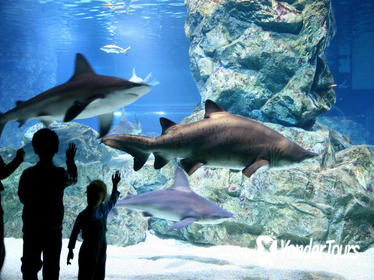 COEX Aquarium Discount Ticket