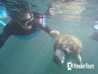Crystal River Manatee Snorkeling Tour