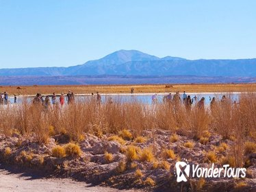 Day Trip to Cejar and Tebinquinche Lagoons from San Pedro de Atacama